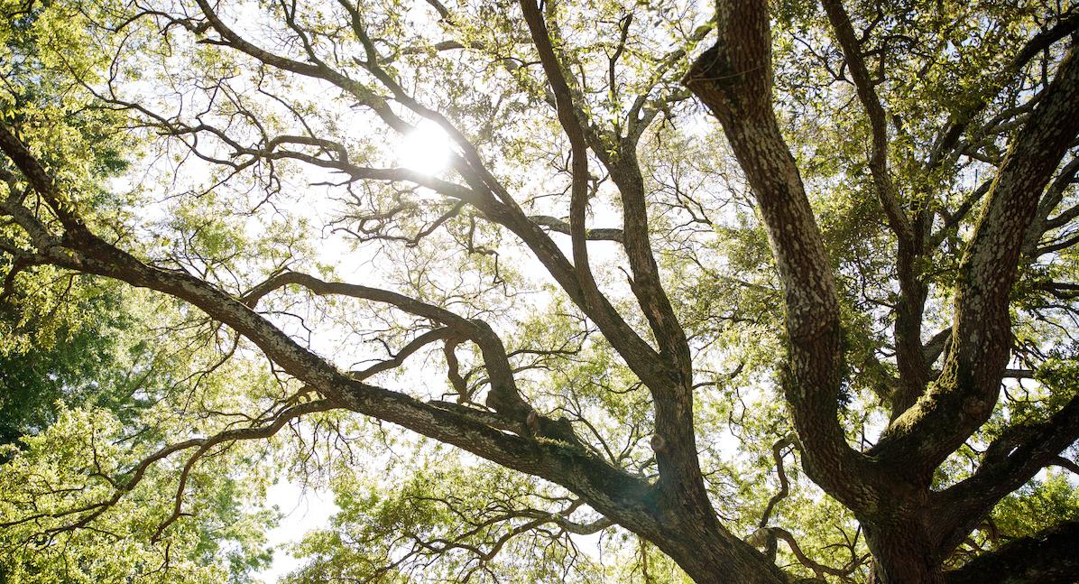 light through tree limbs